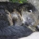 Состояние спячки