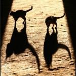 Тень кошки